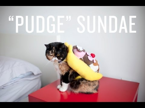 Halloween Banana Split Cat & Halloween Banana Split Cat - YouTube