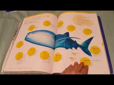 osaka aquarium kaiyukan guide books