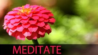6 Hour Relaxation Music: Soft Instrumental Background Music to Relax Mind Body, Yoga ☯039