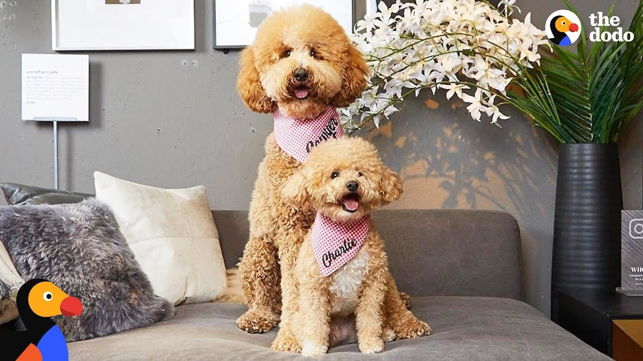 Tiny Rescue Dog Has Supersized Twin