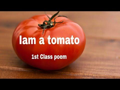 1st class poem My Tomato-P.J.Manilal