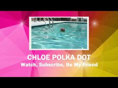 CHLOE POLKA DOT IS A YORKIE PUPPY WHO LOVES TO MAKE YOU SMILE (YouTube Trailer)