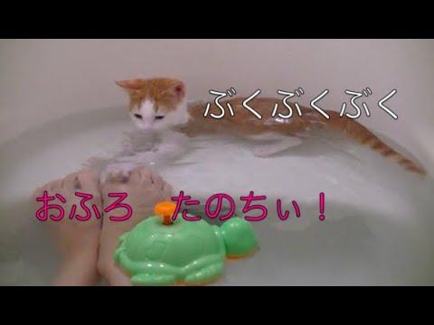 【猫記録183】お風呂大好き子猫 滑ってドボンついでに水泳教室-Swimming of the kitten