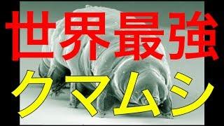 世界最強と謳われるクマムシに衝撃の事実が発覚!!!その正体がヤバすぎる...