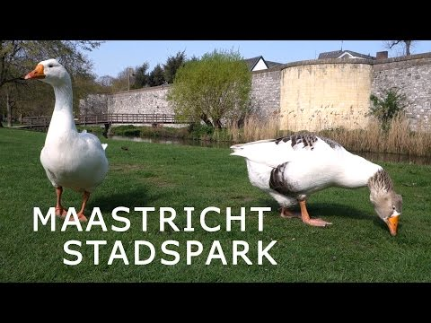 MAASTRICHT - Park - Birds - Vogels - Stadspark - Nederland Reisnotities Netherlands Travel Notes