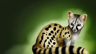 Genetta genetta قط المسك الزباد