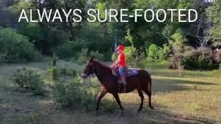 Hip #2 - HONEY BOO BOO- Jake Clark Mule Days, June 19, 2016 - Wild Bunch Mule Co