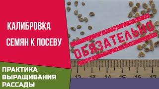 Рассада  Калибровка при подготовке семян к посеву обязательна