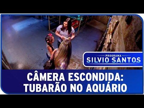 Tubarão no Aquário | Câmeras Escondidas (02/11/14)