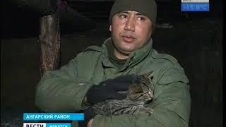 Животных из землянки под Ангарском, где жила семья с двухлетней девочкой, забрали в питомник