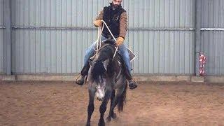 Équitation éthologique en Europe : Débourrages de 7 Étalons en 5 Jours