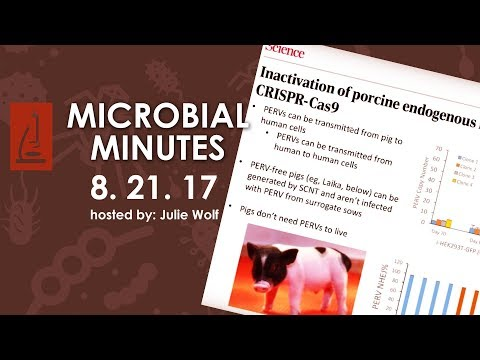 Zika, Archaea chromatin, Abx susceptibility testing, Probiotic clinical trial, & Engineered pigs