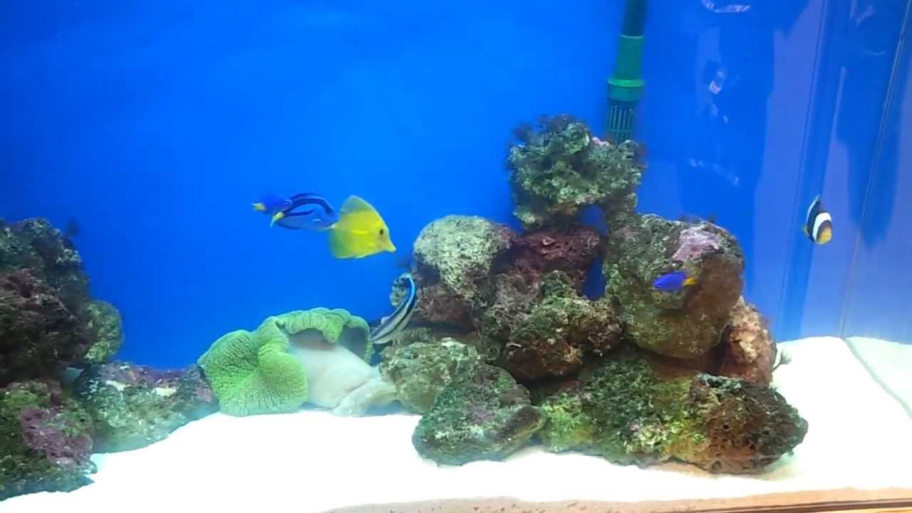 Fish for aquarium in kolkata - Tail Waaggers Marine Tank In Kolkata Pet Fair
