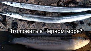 Какую рыбу и когда ловить на Черном море