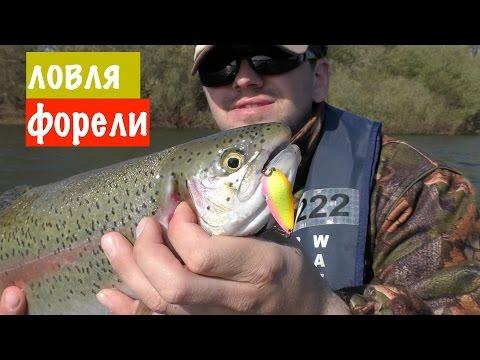 рыбалка возьми лосось вместе с фидером