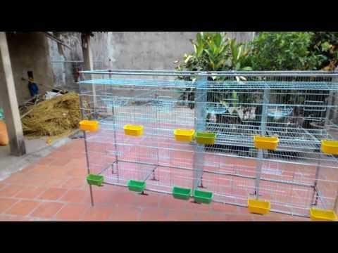 khung chuồng chim bồ câu