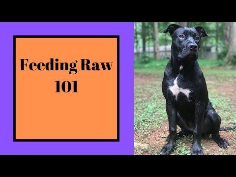 FEEDING PUPPIES OX TAIL / FEEDING RAW DOG FOOD 101/ BARF DIET