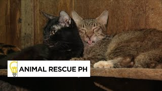 Four dogs and 70 cats in one home? Animal Rescue PH's Mission | Think Possible