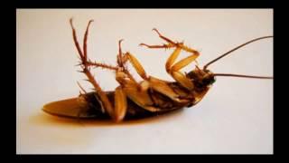 Единственное  эффектное средство против тараканов!