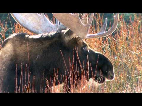Yellowstone Safari: The Wonder of Yellowstone