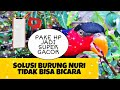 Solusi Burung Nuri Tidak Bisa Bicara  Mp3 - Mp4 Download