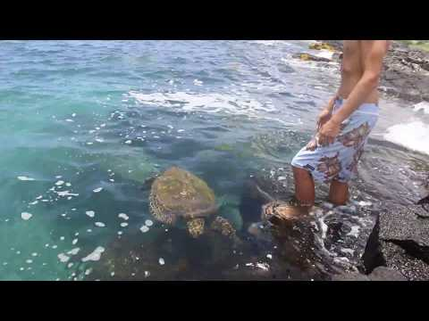 WE HUNG OUT WITH A HONU TODAY! HAWAII LIVING