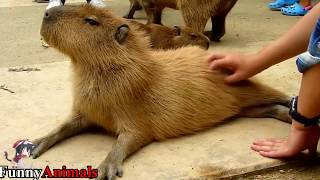 A Cute and Funny Animals Videos Compilation 2017