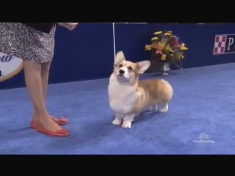 The National Dog Show '15