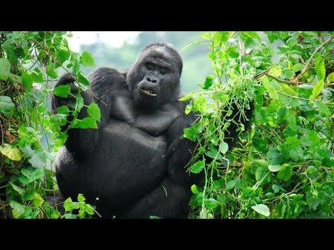 Hang ổ của loài King Kong   (HD Thuyết minh - Natgeo tiếng Việt)