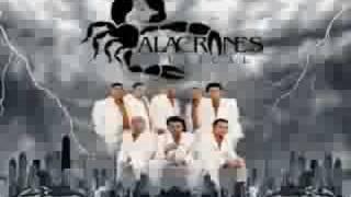 DAME TU AMOR DE LOS ALACRANES MUSICAL