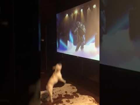 Big boy Duke is entertained by Big Sean