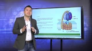 PRIMER B - LEARNING BIOQUIMICA METABOLICA - BIOMOLECULAS