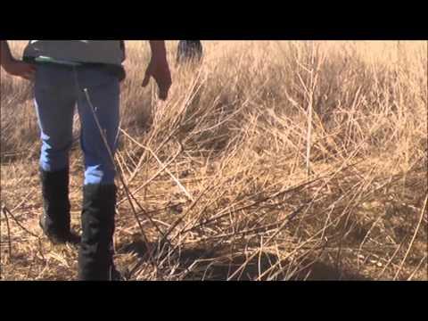 Orange Free State South Africa Upland Bird Hunting Safari