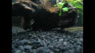 Predatorium - New Plants And Feeding