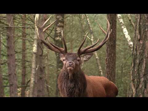 Veluwse Herten Bronstfilm 2017 movie