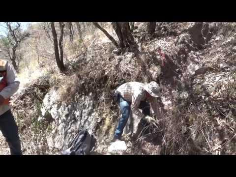 Harvest Gold's Cerro Cascaron Project: San Pedro Vein