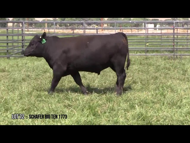 Mid Valley Bull Sale Lot 72