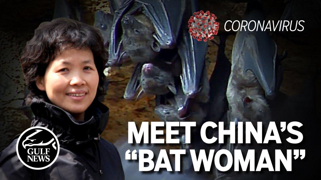 "Download Meet China's ""Bat woman"" Coronavirus expert at Wuhan Institute of virology"