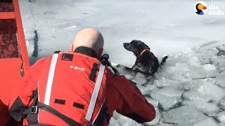 Heroes Save Dogs Trapped In Freezing Water | The Dodo