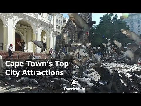 Cape Town Travel Guide    Whats in Cape Town   Cape Town's City Attractions