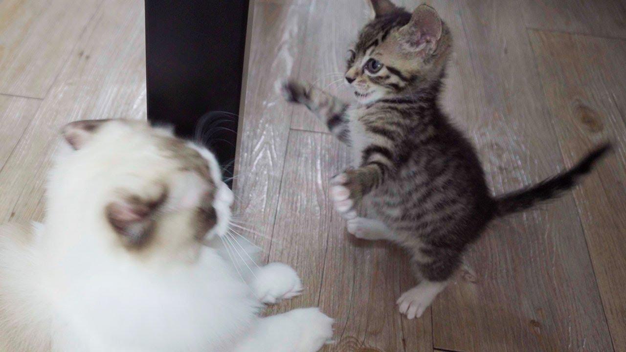 뜬금없이 싸우는 고양이 남매 Vlog