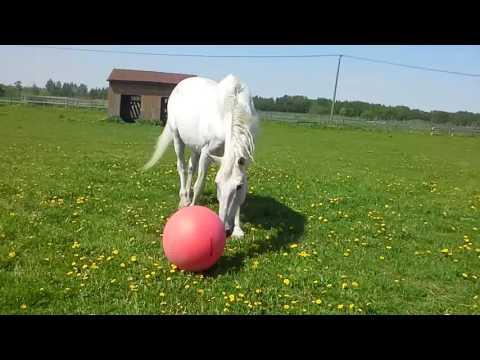 Игра в футбол с лошадью.