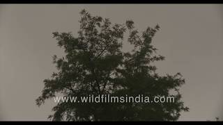 Early monsoons in Delhi - Strong winds with heavy rainfall