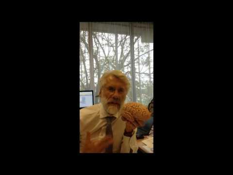 Prof. Dr. Erik Scherder over muziek en het brein