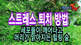 봄산은 오케스트라 공연중,힐링산책,자연치유,중년건강,이…