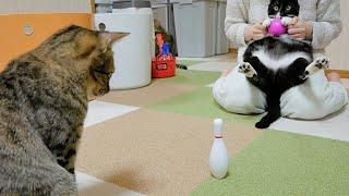 猫ボウリング大会を開催します!