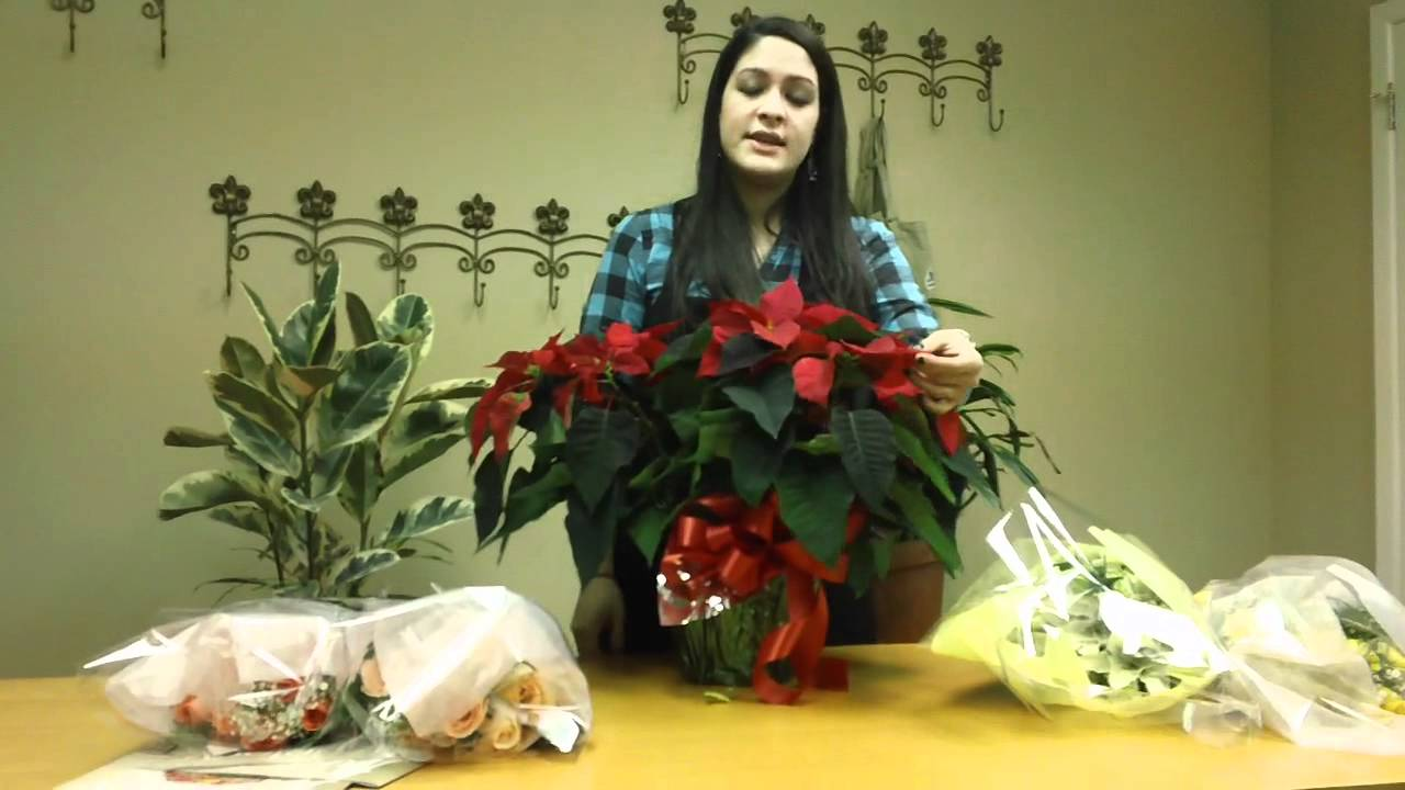 Poinsettia How To Take Care