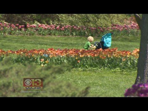 Spring Has Sprung As Flowers Bloom At Sherwood & Ladew Gardens