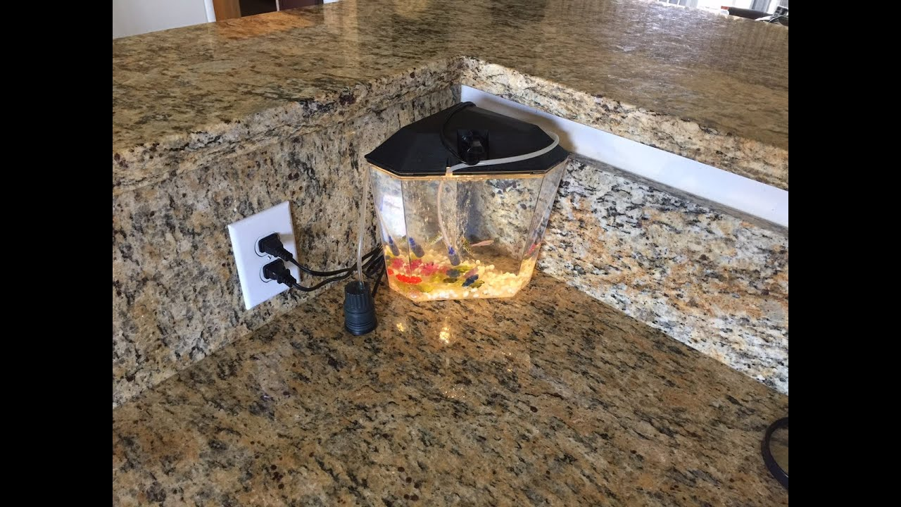 World S Smallest Saltwater Fish Tank Aquarium Flawless Water Levels