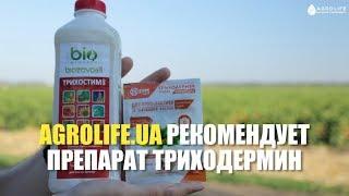 Ефективний препарат Триходермін: опис, застосування, відгуки | Agrolife рекомендує